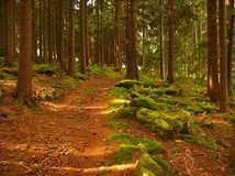 Curved road in the forest royalty free stock photography