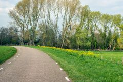Curved country road in a rural landscape. Curved country road in a Dutch rural landscape in the spring season. Wild plants bloom yellow in the roade Royalty Free Stock Photos