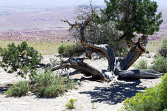 Curved Desert Stock Photography