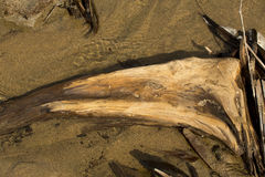 Curved driftwood in water at Flagstaff Lake in northwestern Main Stock Photos