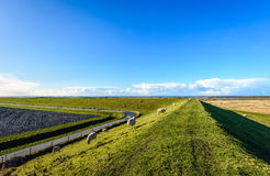 Curved embankment in a Dutch landscape with some sheep. Curved dike in a Dutch landscape with some sheep on a sunny day with a bright blue sky in the end of the Stock Photo