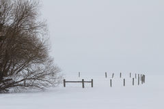 Curved fence in winter. Curving fence beside bare trees in a winter landscape Stock Image