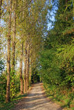 Curved forest road Royalty Free Stock Photos