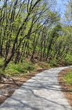 Curved forest road Royalty Free Stock Photo