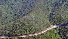 Curved forest road Royalty Free Stock Images