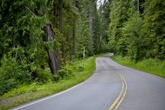 Curved Forest Road Stock Images