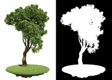Curved Green Tree  on White Background. Stock Photography