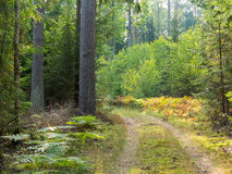 Curved ground road leading across forest Stock Photo