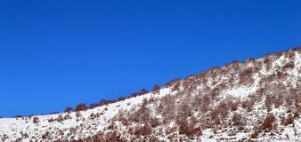 Curved hill covered by snow. Beautiful hill with trees covered with snow and a clear blue sky Stock Photography