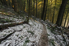 Curved Light. Descending the Elk Mountain trail while a light snow falls, Chilliwack, BC, Canada Stock Image
