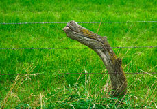 Curved meadow pole Stock Images