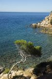 Curved mediterranean pine and clear water. On mediterranean shores, bandol, france Royalty Free Stock Images