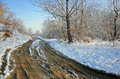 Curved muddy road through forest stock images