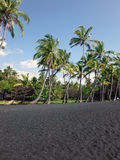 Curved Palm Trees on Black Sand Beach. This picture shows curved palm trees growing out of the black sand beach in Na& x27;alehu, Hawaii Stock Photos