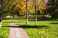 Curved path in autumn park Royalty Free Stock Images