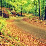 Curved path bellow beech trees. Spring afternoon in forest after rainy day.  Wet asphalt with smashing orange leaves. Royalty Free Stock Photos