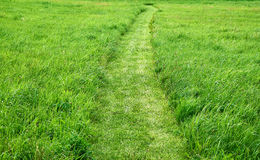 Curved path cut in a graas field Royalty Free Stock Photos