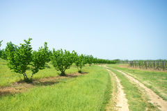 Curved path by the orchard Stock Image