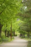 Curved path in the seonyudo park Royalty Free Stock Photos