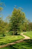 Curved path with a tree. Curved pathway with a tree in a background leading through the park Royalty Free Stock Photography