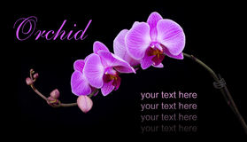 Curved pink orchid Royalty Free Stock Photos