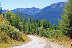 Curved ranger road. Through the forest at high altitude Royalty Free Stock Photo