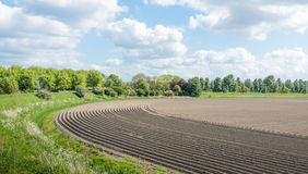 Curved ridges with newly seeded potatoes Stock Photo