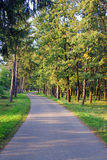Curved road through the forest Stock Photography