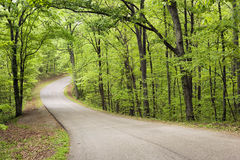 Curved road through forest. Stock Photos