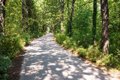Curved road in the forest Stock Image