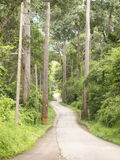 Curved road in forest on hill Royalty Free Stock Photos