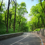 Curved road between the green trees Stock Images