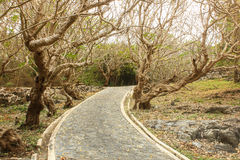 Curved road in the mountains under the old tree. Stock Photo