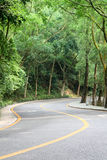Curved road with trees Stock Image