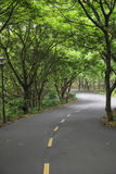 Curved road with trees on both sides Stock Photo