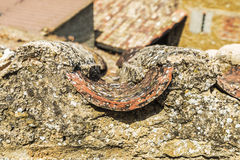 Curved roof tile with textured moss Stock Images