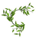 Curved Round Branch Bamboo Green Leaves Royalty Free Stock Image