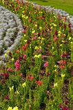 Curved row of flowers Royalty Free Stock Image
