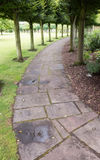 Curved row of trees lining damp paving slabs. This image of the curved paving slabs was taken on a damp summer`s day in Haddington, East Lothian, Scotland Royalty Free Stock Photography