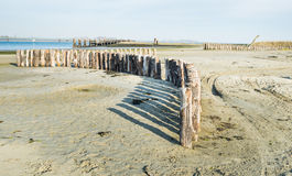 Curved row of wooden poles on the beach Royalty Free Stock Photography