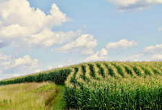 Curved rows Royalty Free Stock Photo