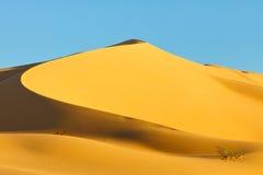 Curved Sand Dune, Sahara Desert Stock Images