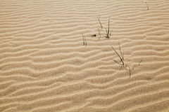 Curved sand texture Stock Image