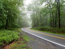 Curved smooth road with bright yellow and white markings on grey asphalt in green summer forest stock photography