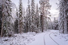 Curved snow track Royalty Free Stock Photos