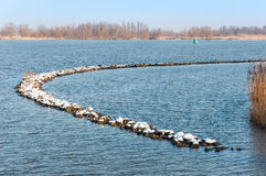 Curved and snowy breakwater in a Dutch river Stock Photos