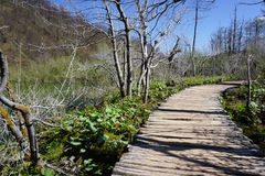 Curved timber walkway in Plitvice national park Stock Photography