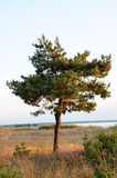 Curved tree Stock Image