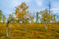 Curved tree Royalty Free Stock Photography