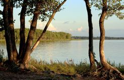 Curved tree. S on the shore of Lake Royalty Free Stock Photography